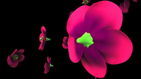 Purple flowers on black background Animation