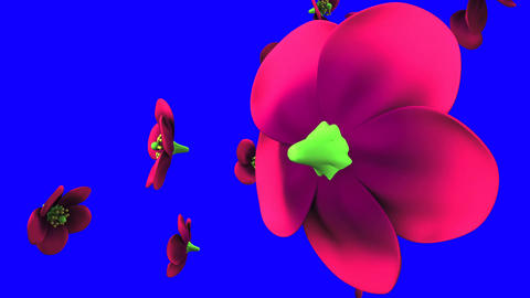 Purple flowers on blue chroma key CG動画