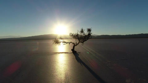 Aerial scene of dry twisted tree silhuette at backlight in sunset in a dry broken soil. Desert with Live Action