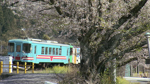樽見鐵道と桜06 Live Action