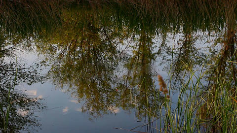 Reflections in the water on a small lake Footage