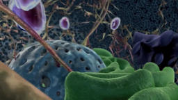 3D Scientific Animation of A Journey Thru The ExtraCellular Matrix Footage