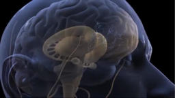 3D Animation of Neural Brain Activity Rotating on Black Background Footage
