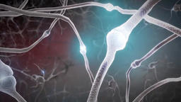 3D Animated central nervous system. Brain and Neuron Footage