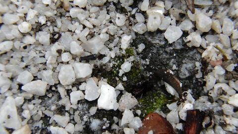 Closeup Black Ants On A Dead Worm Footage