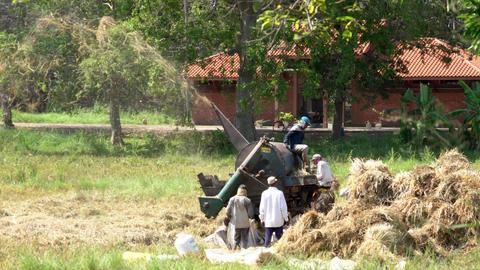 Haberna, Sri Lanka- 2019-03-22 - Farmers Run Thrashing Machine to Separate Grain Footage