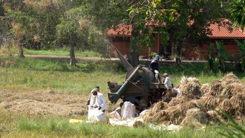 Haberna, Sri Lanka- 2019-03-22 - Farmers Feed Thrashing Machine to Separate Footage