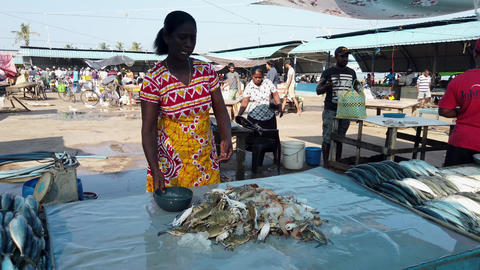 Nogombo, Sri Lanka- 2019-03-22 - Fish Vendor Organizes Pile of Crabs Footage