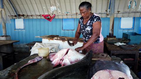 Nogombo, Sri Lanka- 2019-03-22 - Fish Vendor Hacks Huge Manta Ray in Half Footage
