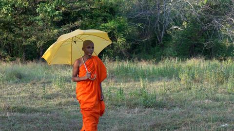 Haberna, Sri Lanka- 2019-03-22 - Young Monk Walks Towards Camera With Umbrella Footage