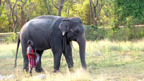 Haberna, Sri Lanka- 2019-03-22 - Elephant Raises His Trunk With Handler Standing Footage