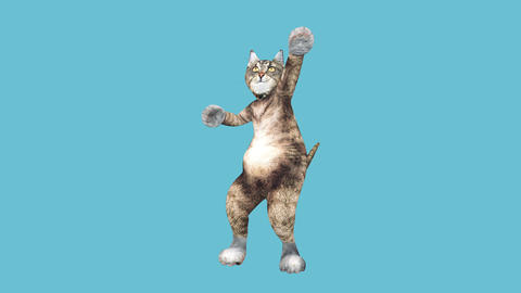 Comic brown pussycat dancing alone in a modern style in empty colour space Live Action