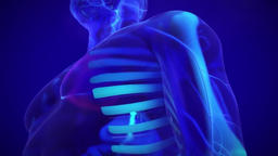 Medical Animated Human Nervous System in Blue Background  Footage