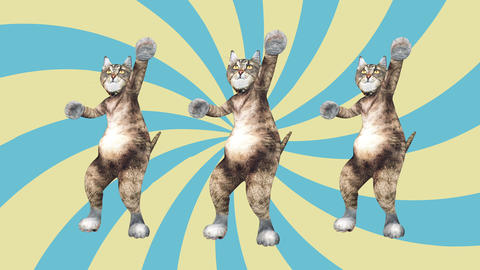 Concept Cool and Fun Pet Kitty Dancing Gangnam Style Move to the Beat Animated Live Action