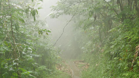 The path in the foggy jungle Live Action