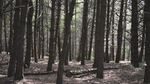 the camera moves forward through the wild forest Live Action