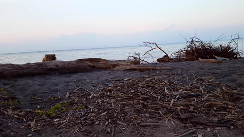 Beautiful Beach With Coast Driftwood in the Morning. Daytime Vacation Shoreline Beach With Washed up Footage