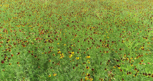 Drone Flight over wildflowers Live Action