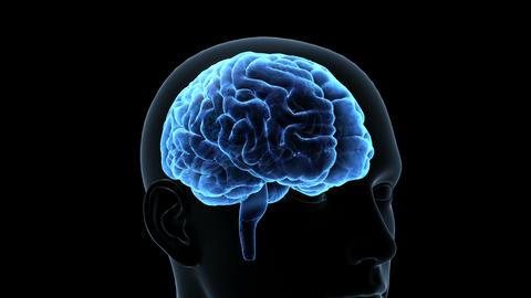 Brain Head 19 1 D1bA4 4k Animation