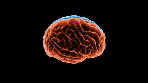 Brain Head 19 1 B1bA5 4k Animation