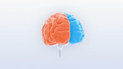 Brain Head 19 1 A1bS2 4k Animation