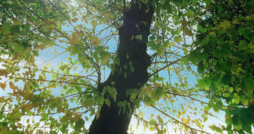 forest trees silhouette and green spring summer leaves at Footage