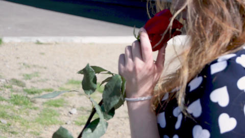 Cute girl walking with a red rose in her hands video footage Footage