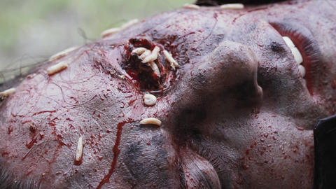 Close up of a decaying eye with lots of maggots in it Live Action
