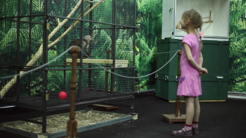 A girl looks at a monkey in a cage at the zoo Footage