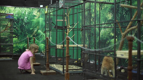 A girl looks at a monkeys at the zoo Live Action