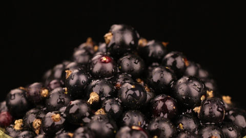 Raindrops fall on a rotating pile of ripe black currants. Isolated Footage