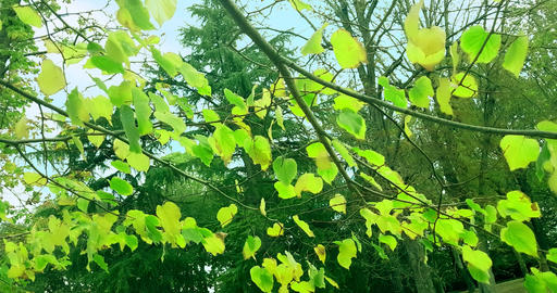 forest trees green spring summer leaves at daylight sky with sun flare rays flying through forest on Footage