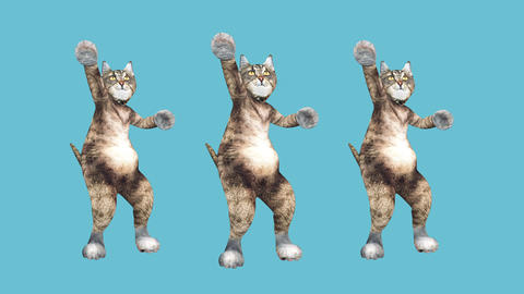 Concept Cool and Fun Pet Kitty Dancing Hip Hop Style Move to the Beat Animated Live Action
