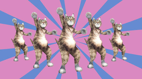 Cute brown pussycats dancing together in a modern style in tunnel colour space Live Action