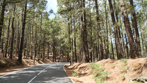 POV driving through a pine forest in mountains. Point of view driving,view from Live Action