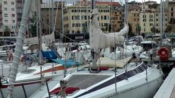 Europe Italy Liguria Savona 002 many sailing yachts in marina Footage