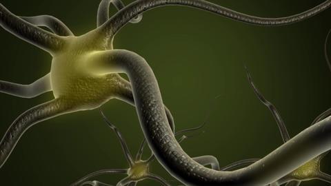 Neuron cells, Stock Animation