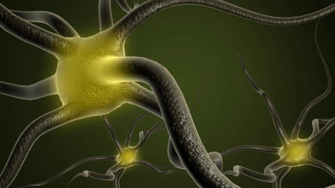 Neuron cells Animation
