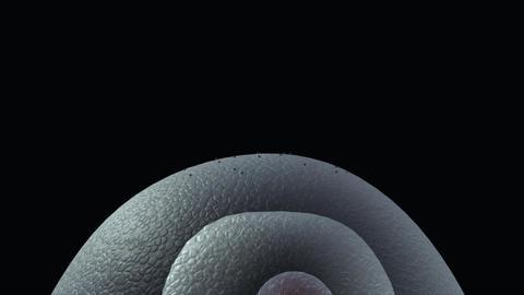 Virus on cells Animation