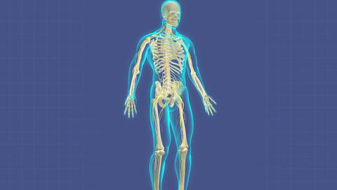 Human nervous system with annotation, Stock Animation