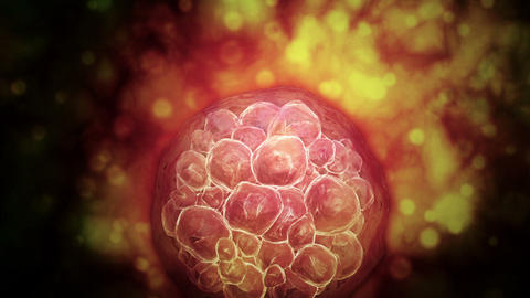 Microscopic visualization of a blastocyst Animation