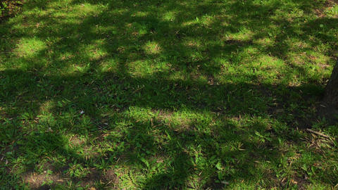 Lawn with green grass and tree shadows on a sunny spring day. Green natural Footage