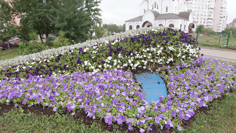 Flower bed in the form of a whale Footage