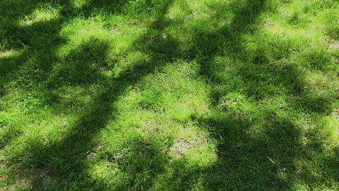 Lawn with green grass and tree shadows on a sunny spring day. Green natural Live Action