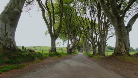 Dark Hedges of Stranocum in North Ireland Footage