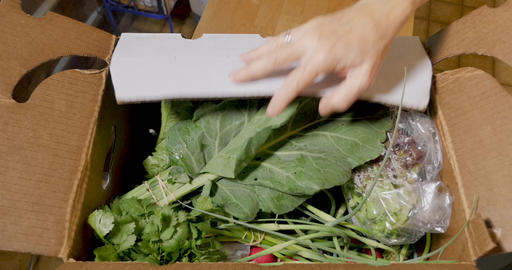 Hands open a box of fresh nutritious vegetables part of a community supported agriculture box Footage