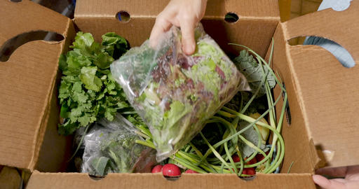 Hand unpacking a box of fresh seasonal organic vegetables from a farmers market or CSA community Footage