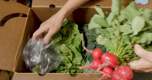 Woman's hands picking out fresh organic vegetables from a farmers market box including collard Footage