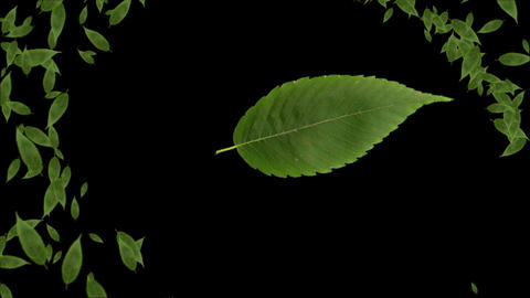Leaf animation Animation