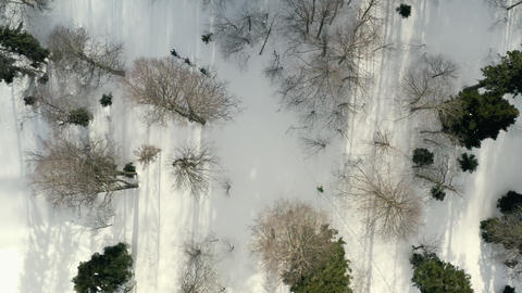 Group skiers walking on ski in snowy forest at winter vacation drone view. Aerial view people ski Footage